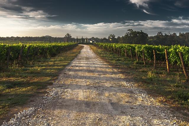 country lane, gravel road, tuscany