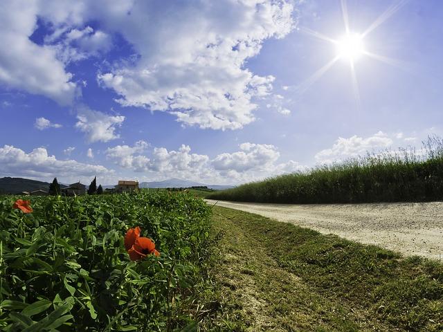 roads, poppies, flowers
