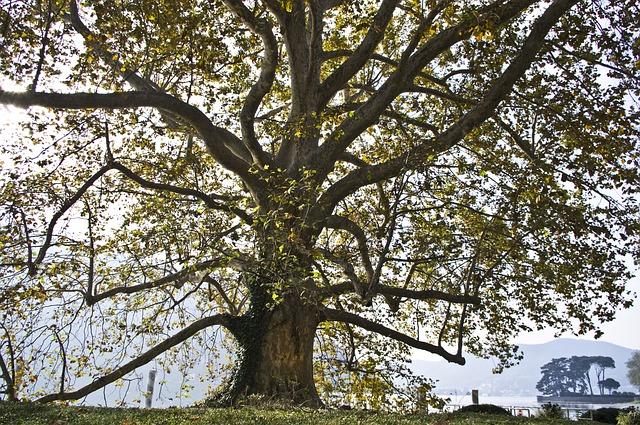 tree, italy, nature
